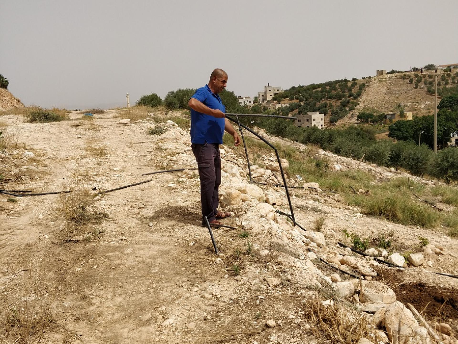 Bardala, Northern Palestinian Jordan Valley: 400 young olive trees were cut by Israeli soldiers, irrigation pipes, cut – why??