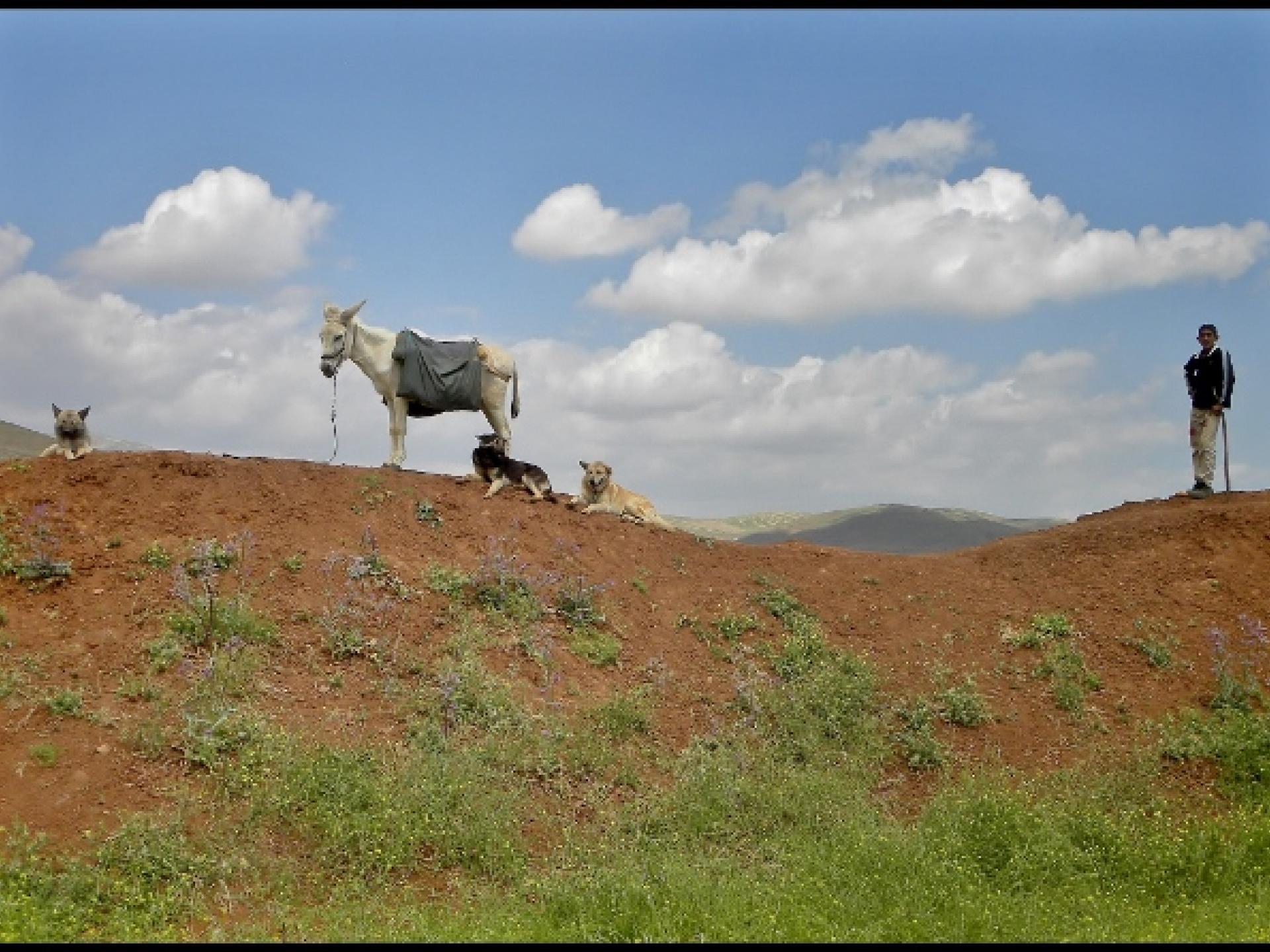 31.3.15 Jordan Valley בקעת הירדן