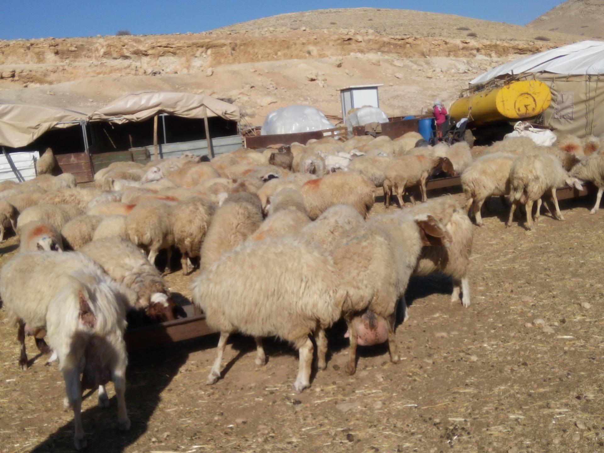 28.12.15 Halat Makhul חאלת מכחול