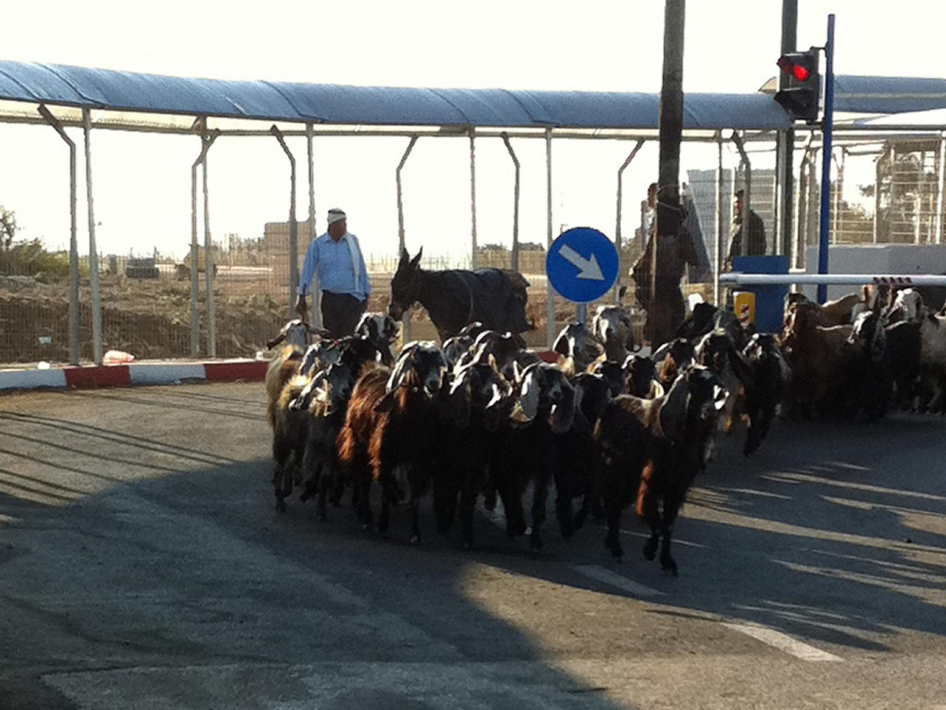 Tura/Shaked checkpoint 07.10.12