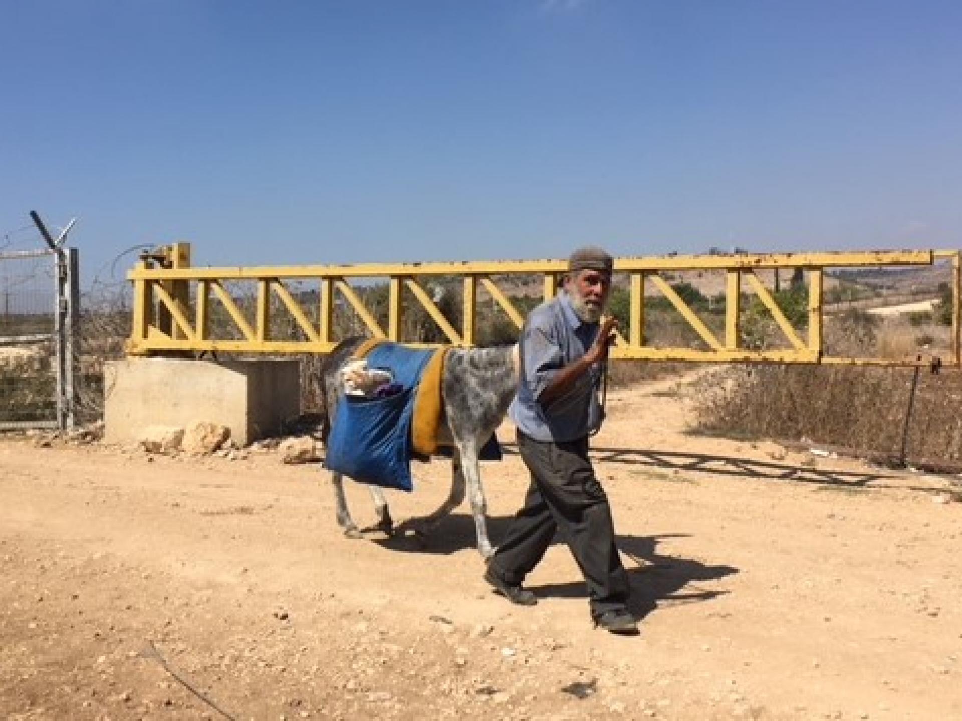 Palestinian and his donkey cross the Falamiya North CP