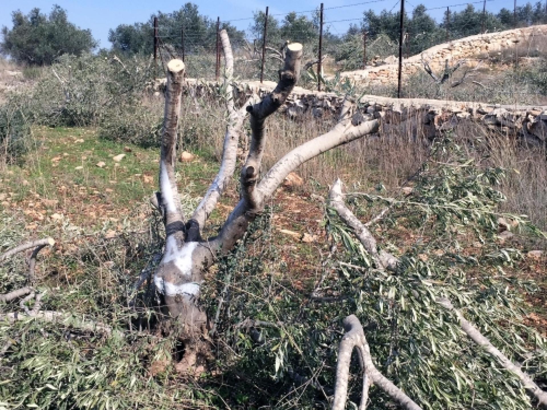 עצי הזית ופרנסה הפכו כביש עוקף