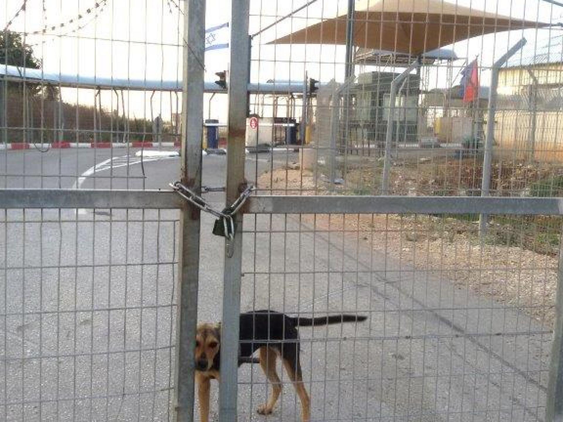 מחסום טורה: האם הכלב יעבור ללא היתר מעבר?