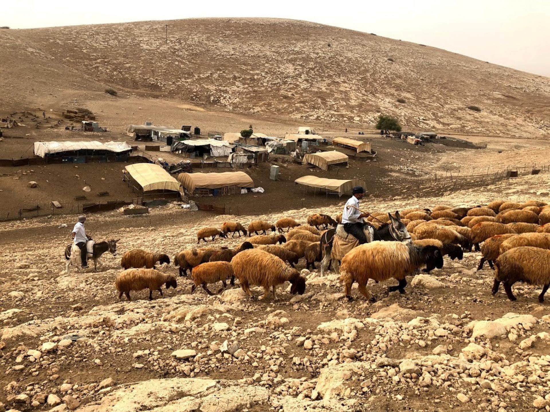 בקעת הירדן: ליווי רועים פלסטינים באזור אום זוקא