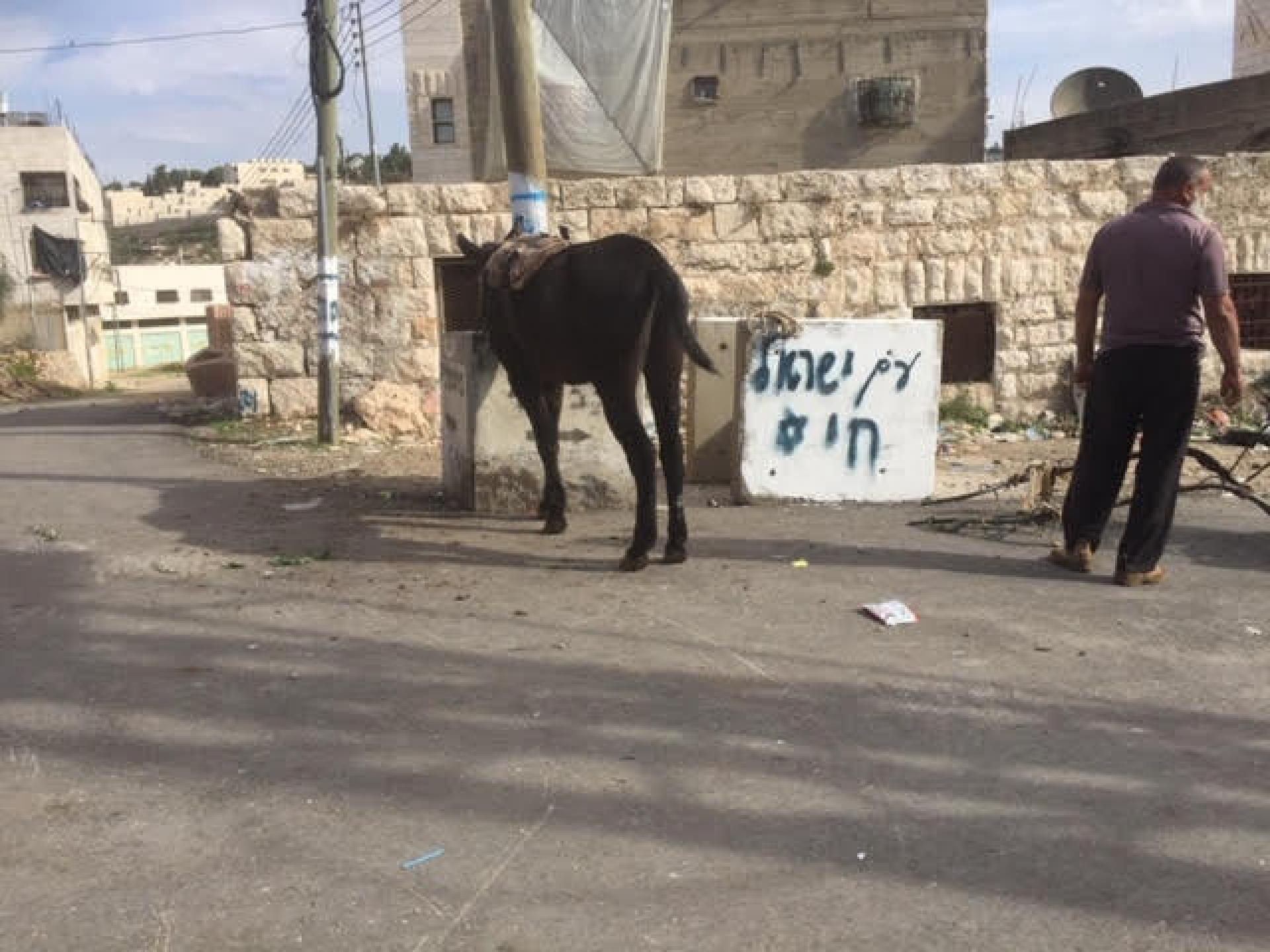 The grafitti The People of Israe live and the Palestinian with his broken cart