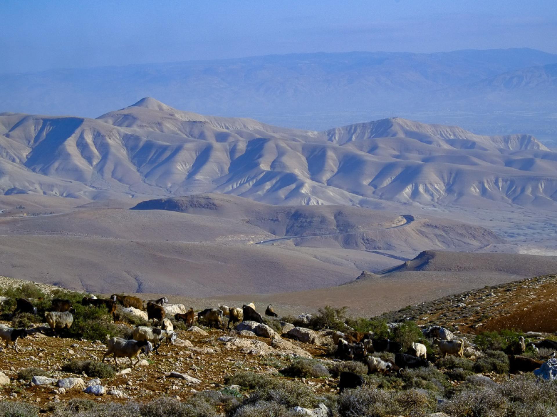 הכבשים רועות על הגבעות מעל לבקעה