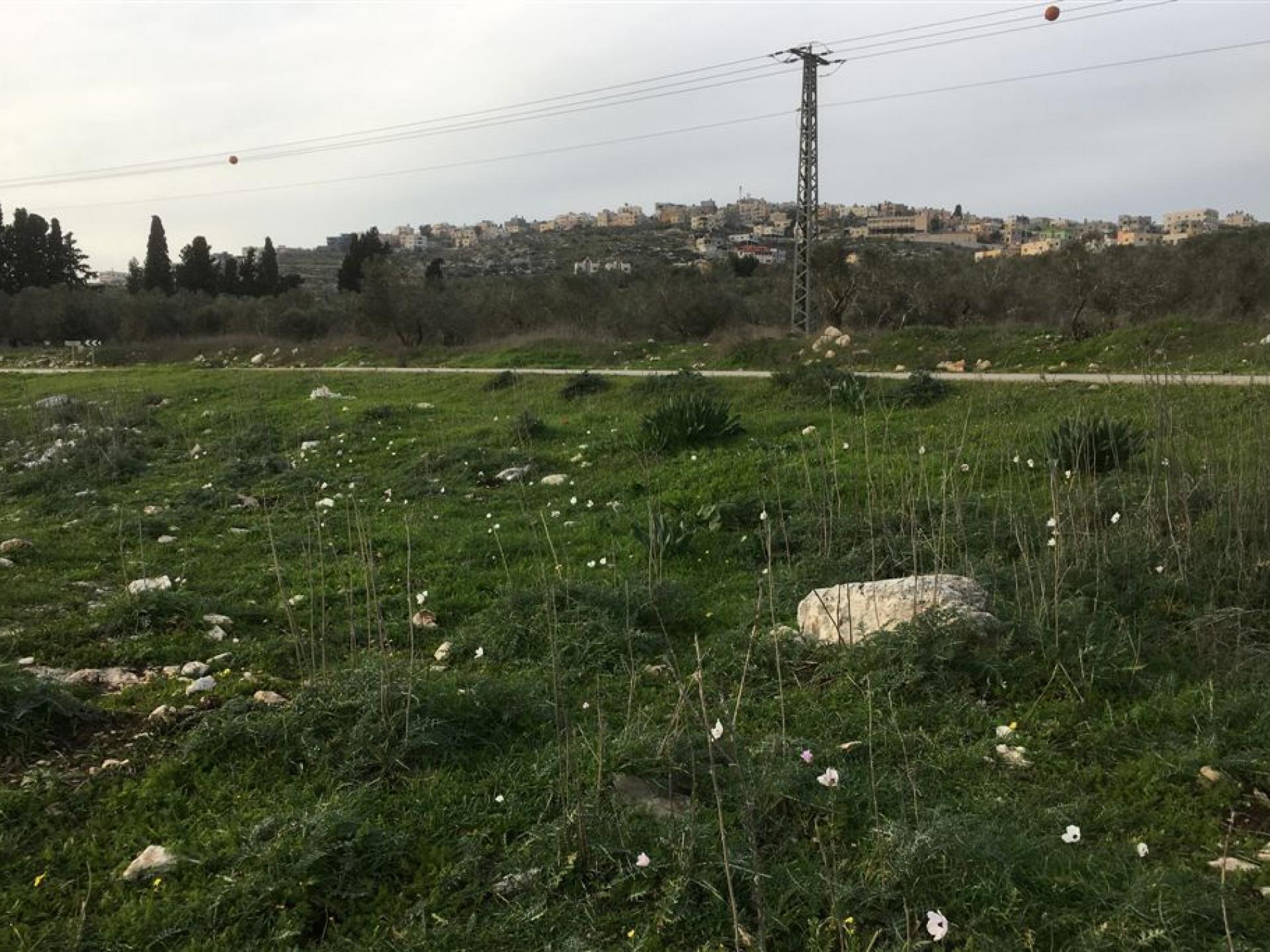 מחסום יעבד: שדה כלניות לצד הדרך, ברקע העיירה יעבד
