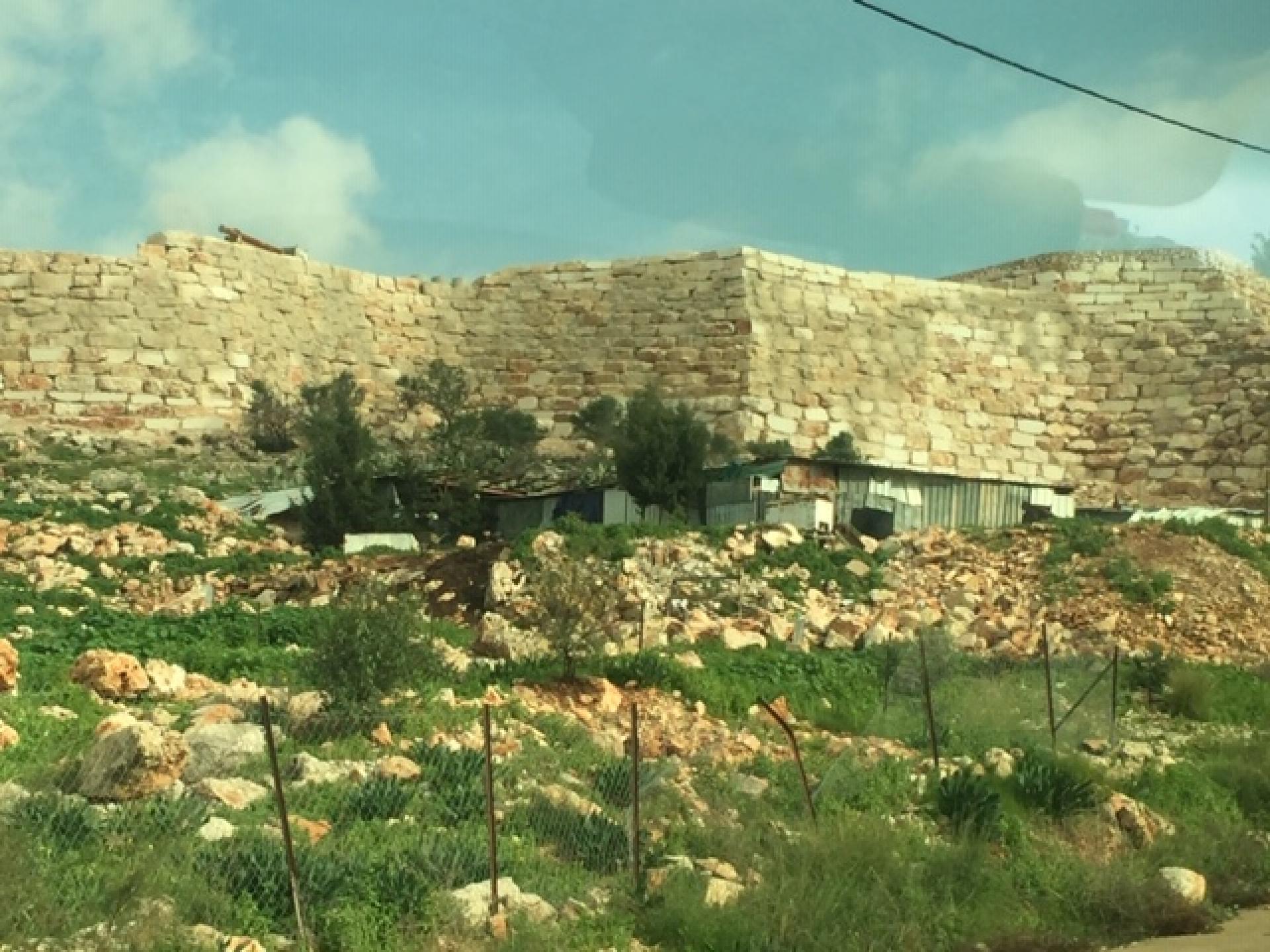 החומה שנבנתה על עצי הזית של דיר בלוט