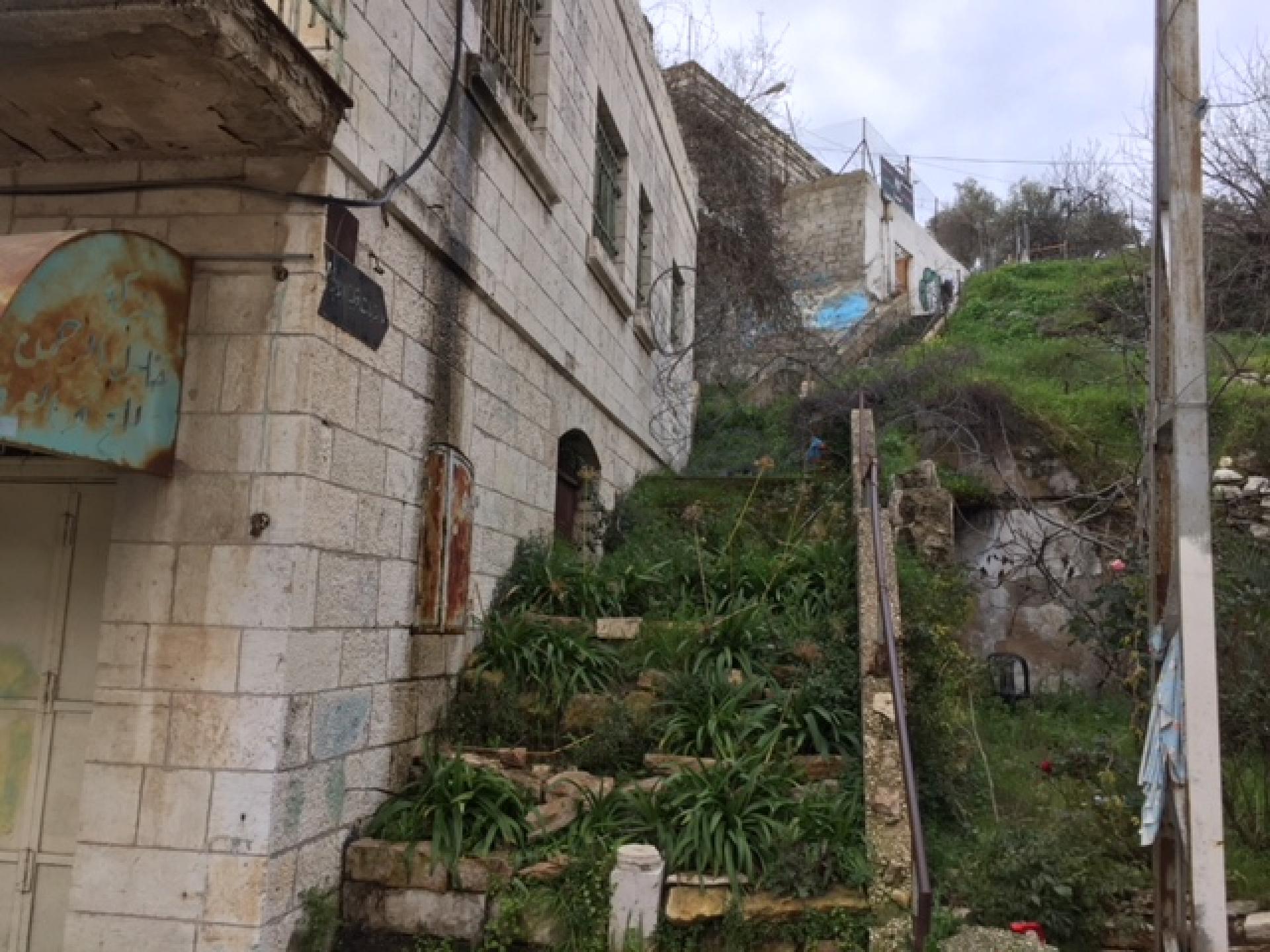 מדרגות שהיו מכוסות צמחית פרא