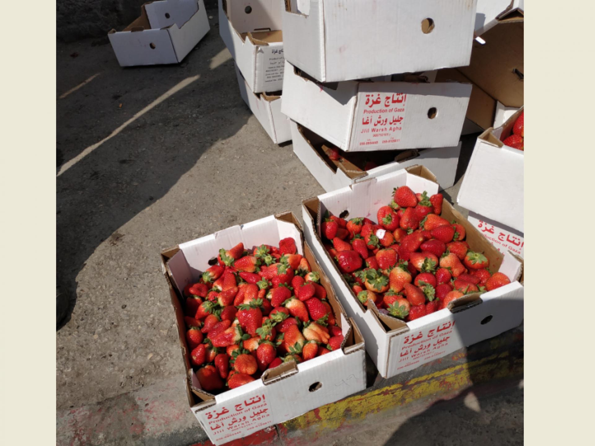תותים מעזה