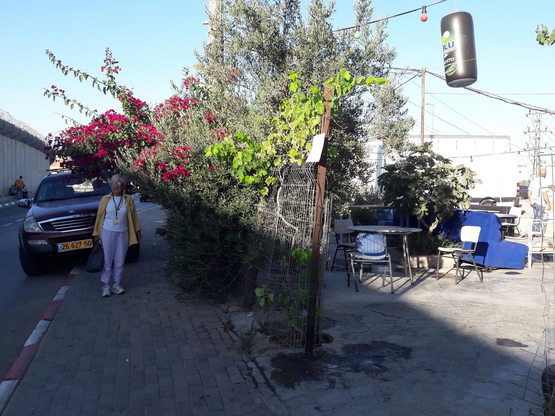 חנה תחת הביגונביליה, מימין חצר בית הקפה ומשמאל מעבר לכביש חומת הפרדה