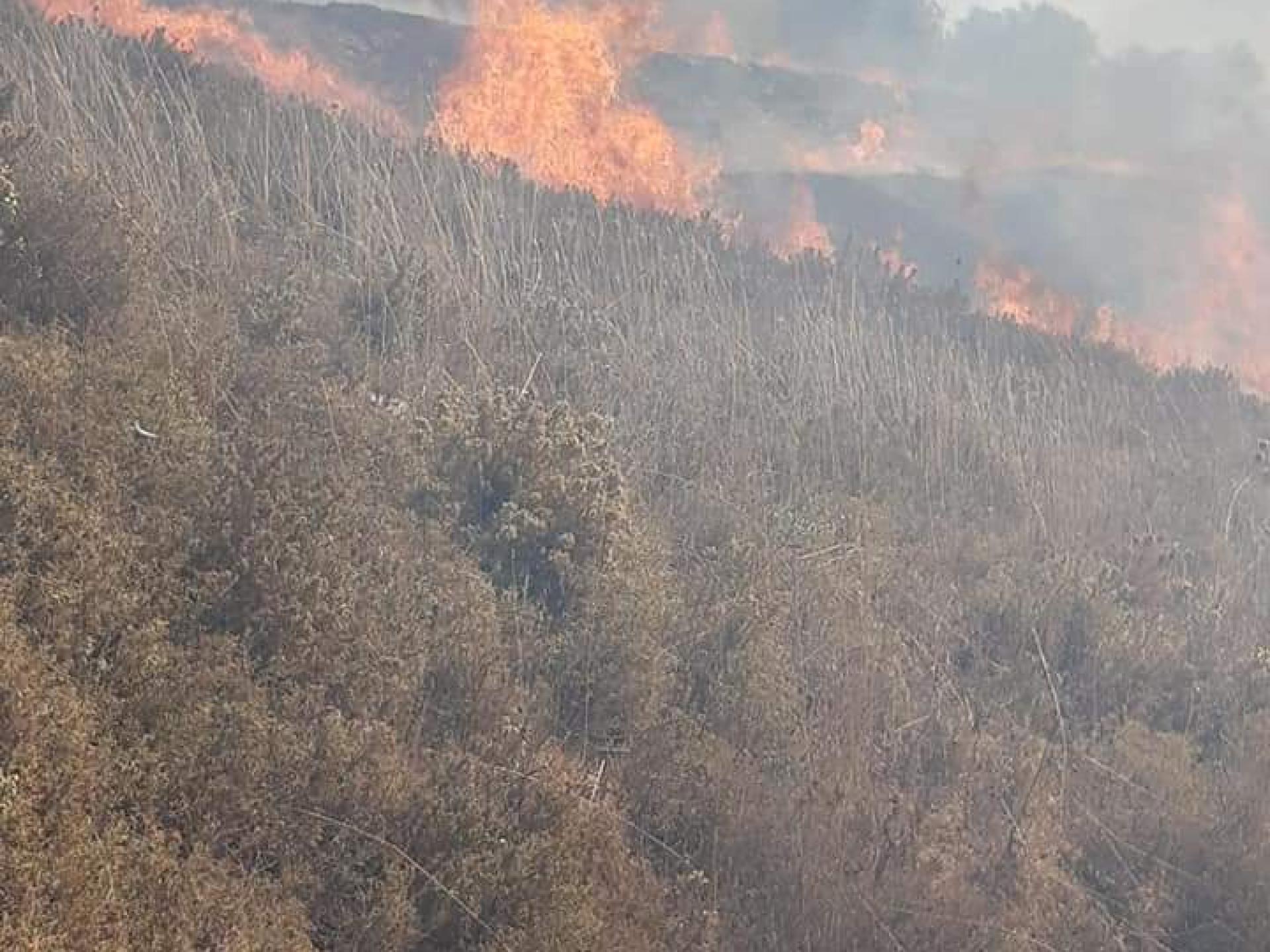 האש מתפשטת ומכלה את עצי הזית