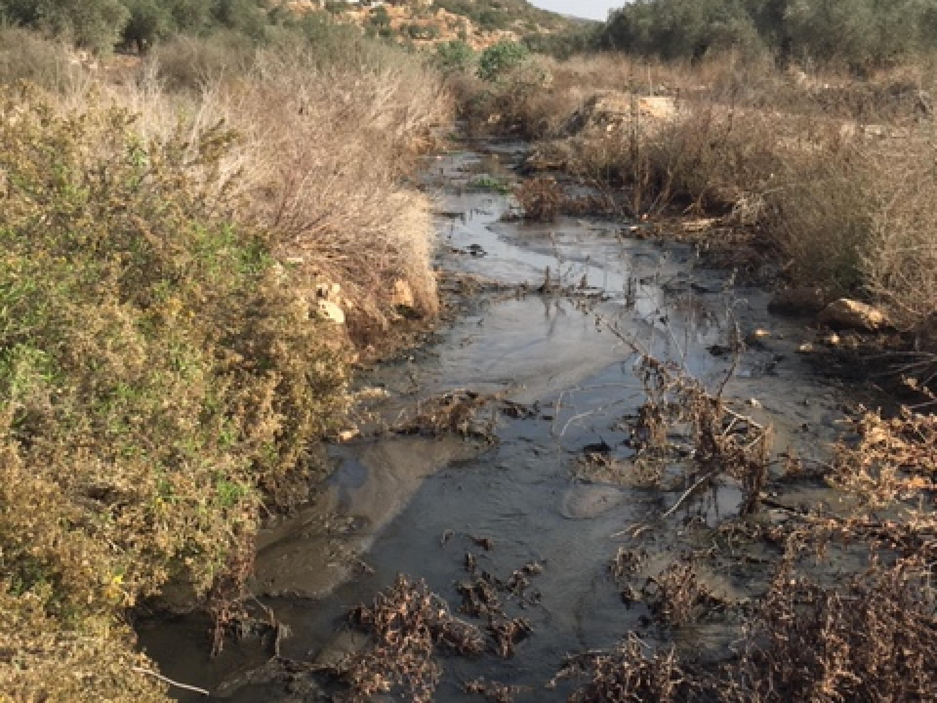 השפכים של ההתנחלויות בין המטעים של כפר א-דיכ