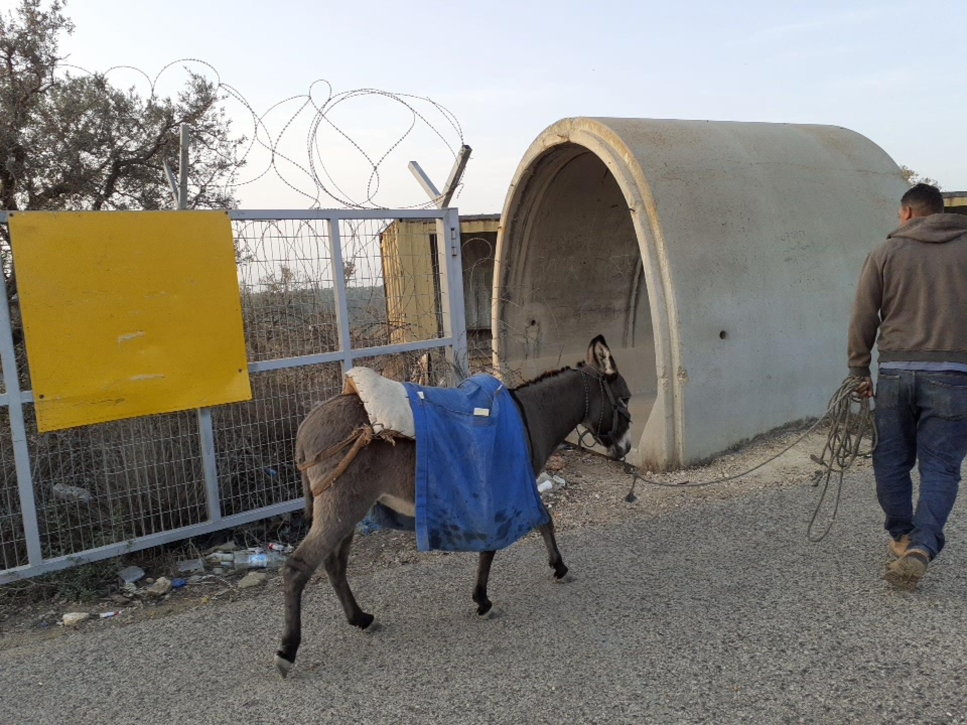 חמור ליד המחסום