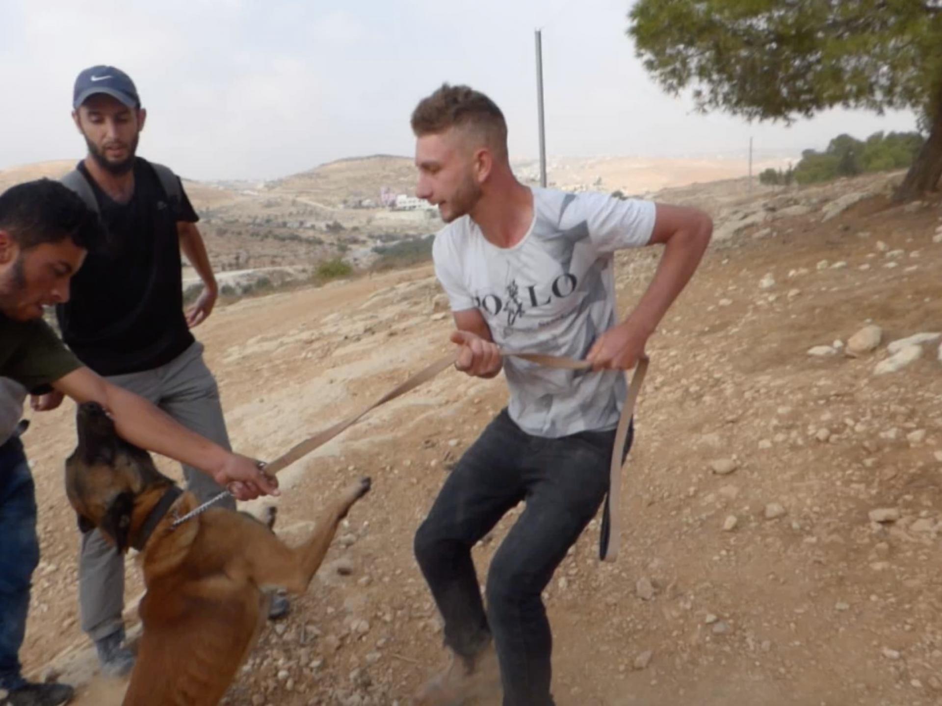 """אירוע התקיפה של באסל ע""""י כלבו של עילי פדרמן"""