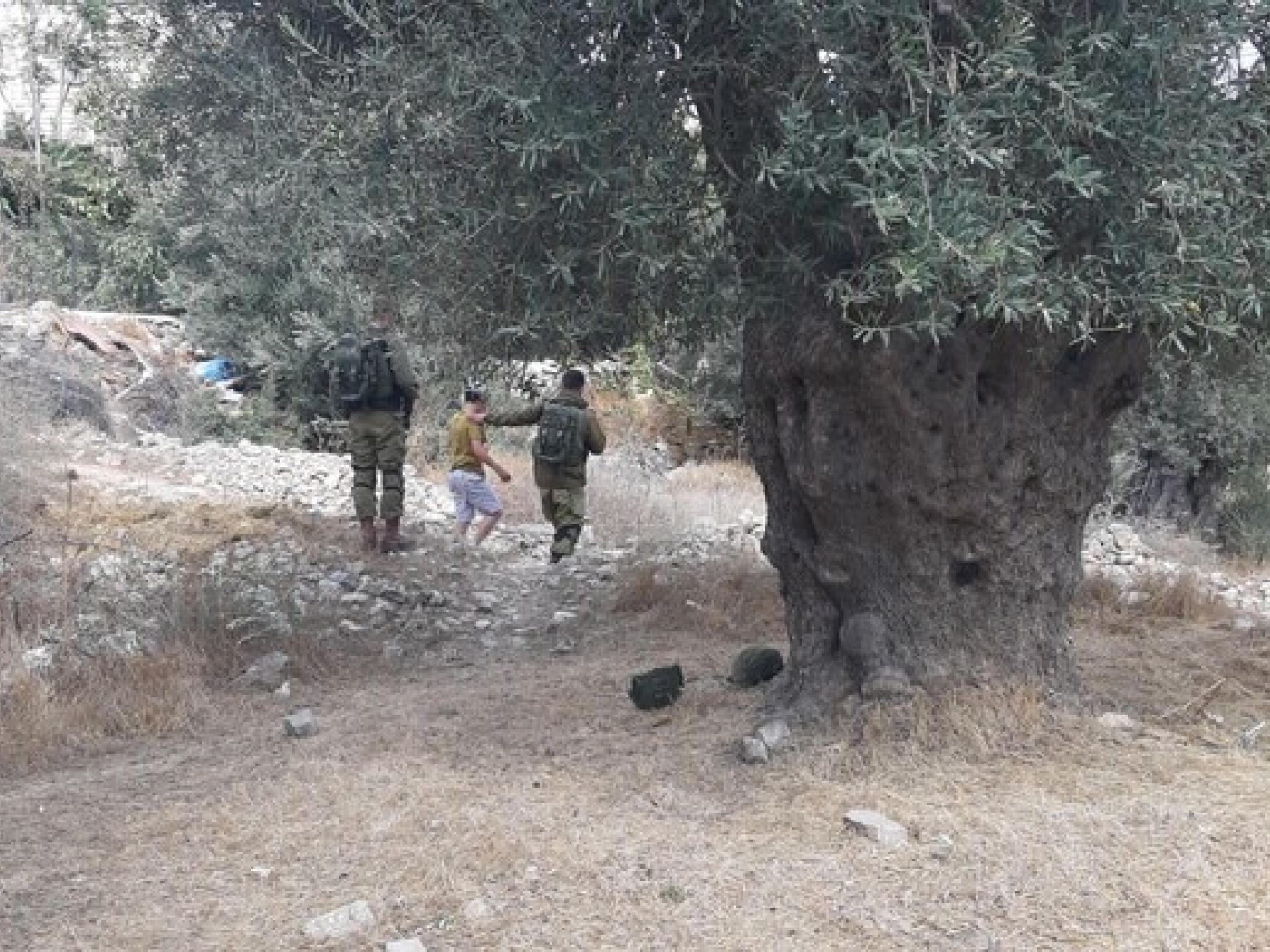 חיילים מאבטחים  את המסיק