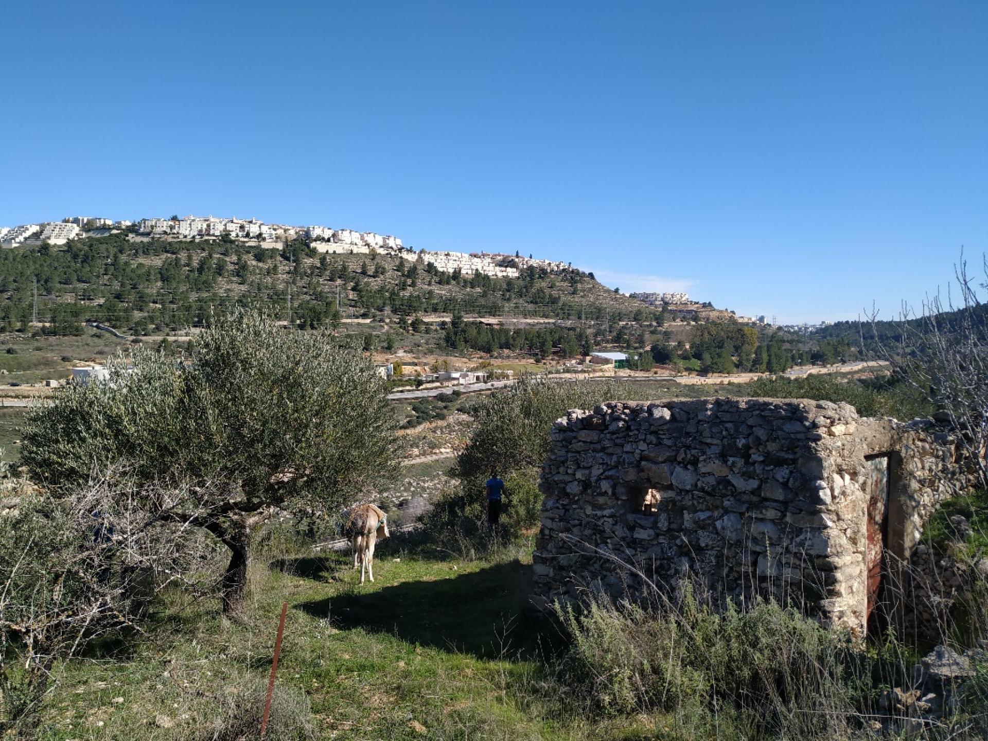 מבנה האבן שנותר בכרם בוואלג'ה