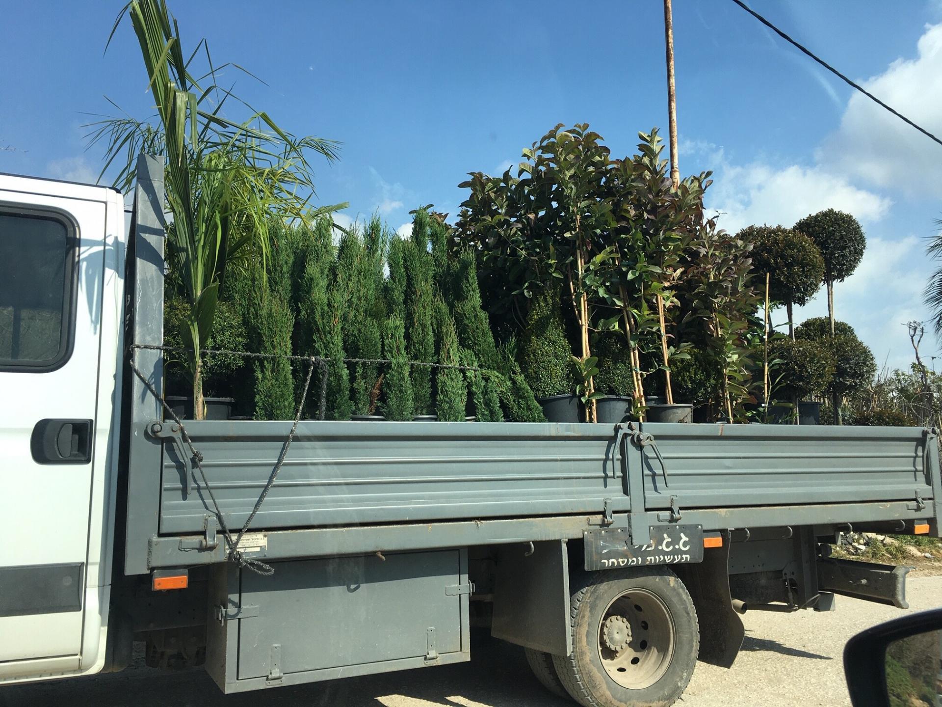 משאית עמוסת עצים צעירים יוצאת ממחסום חבלה