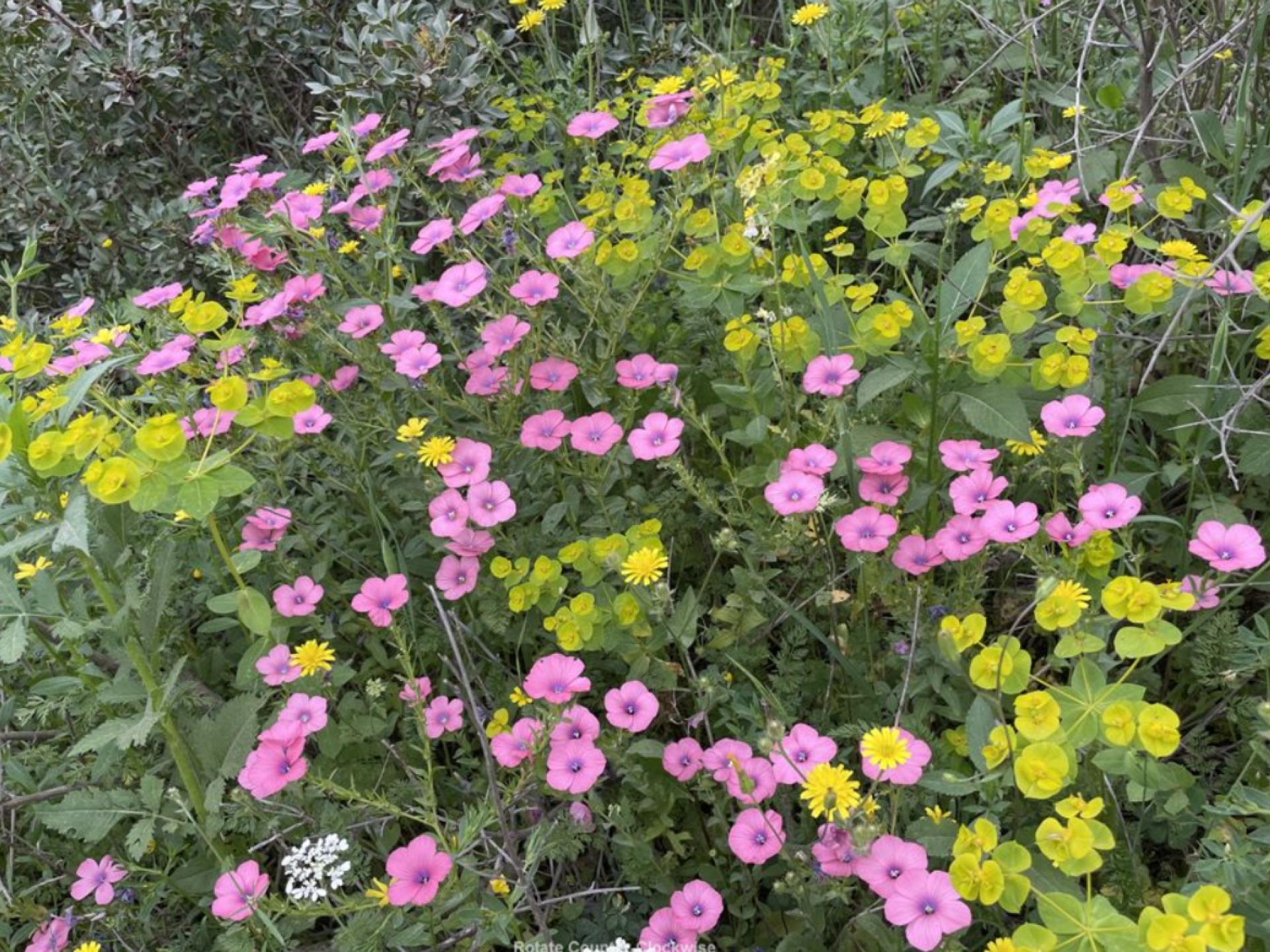 פרחי אביב צבעוניים בשטח
