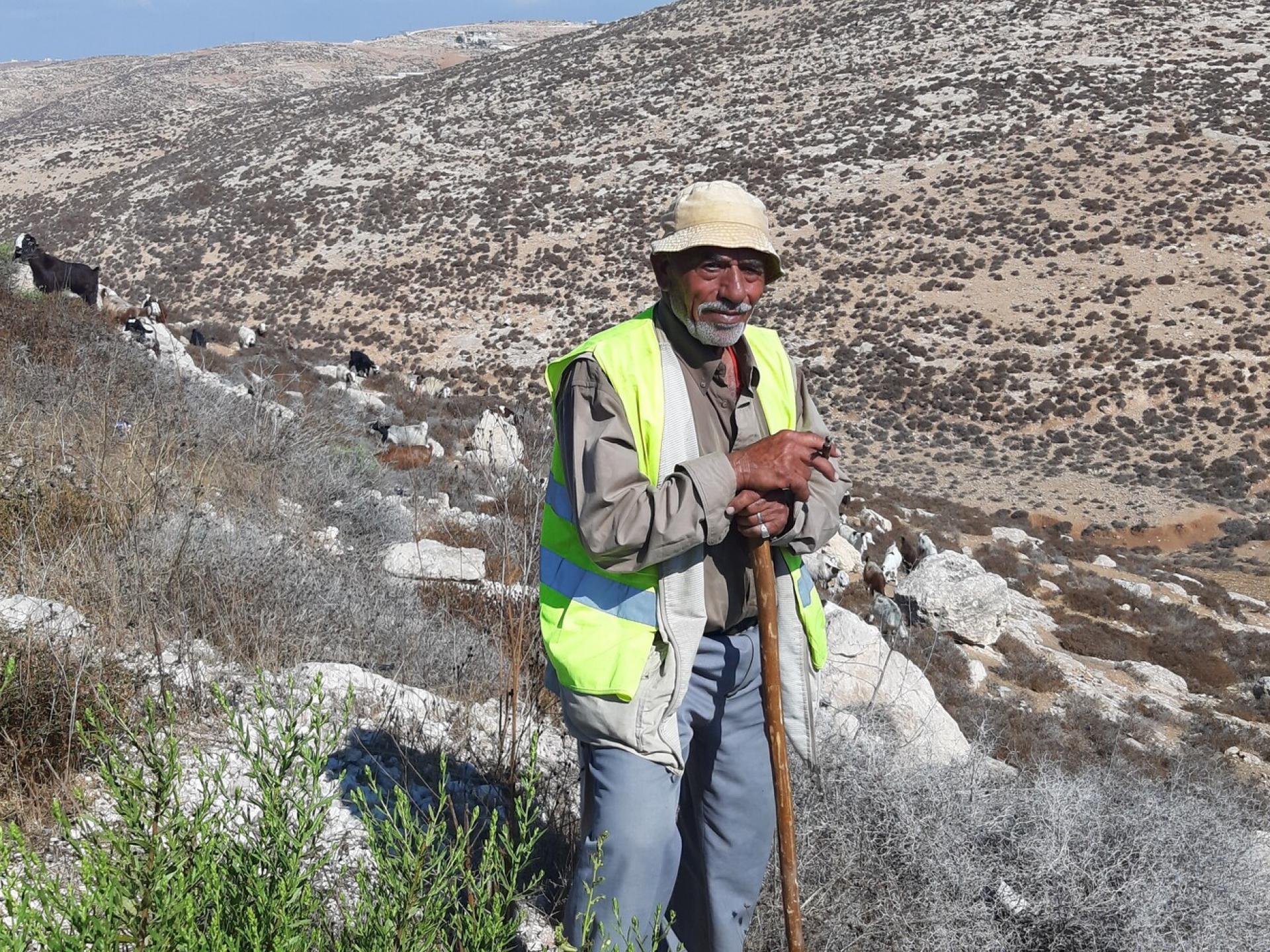 דרום הר חברון - אבו סאפי רועה את עדרו