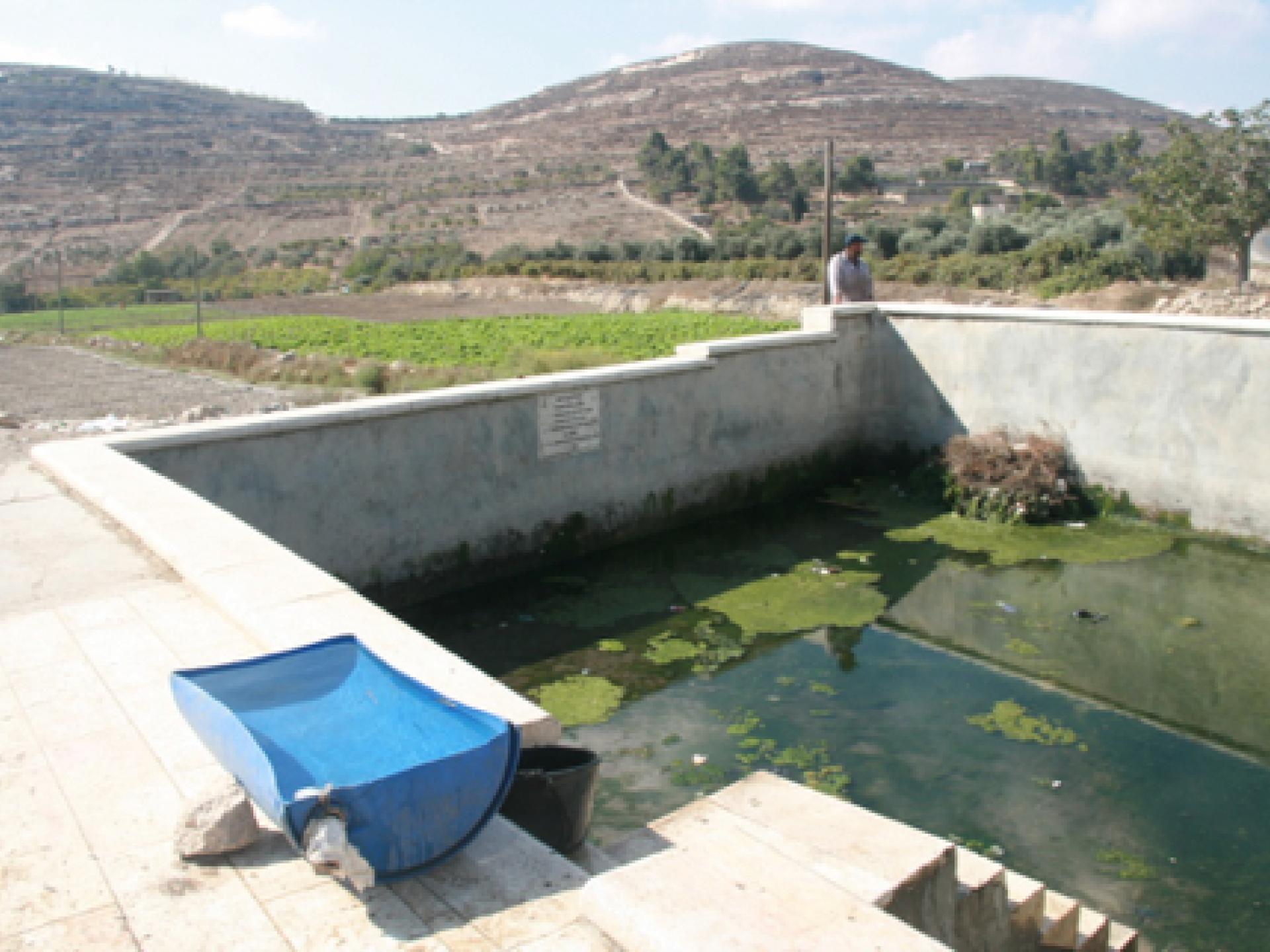 במעיין לפני צומת דורא-אל פוואר שאבו מים לעדרים