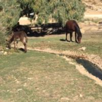 donkey & pony grazing in oasis-like valley.