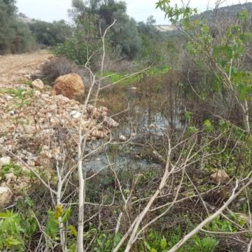 The sewage flowing from Sha'arei Tikva settlement