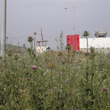 מחסום יעבד: שדה קוצים ופרחים בסוף האביב מכסה על כיעור המחסום