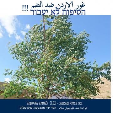 עץ התקווה בבקעת הירדן