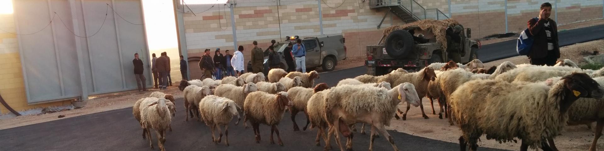 מעבר אורנית - מהבית לשטח החקלאי
